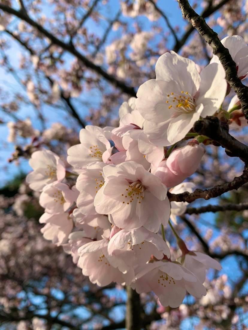 春のオススメ【ぐるっとあわら満喫】