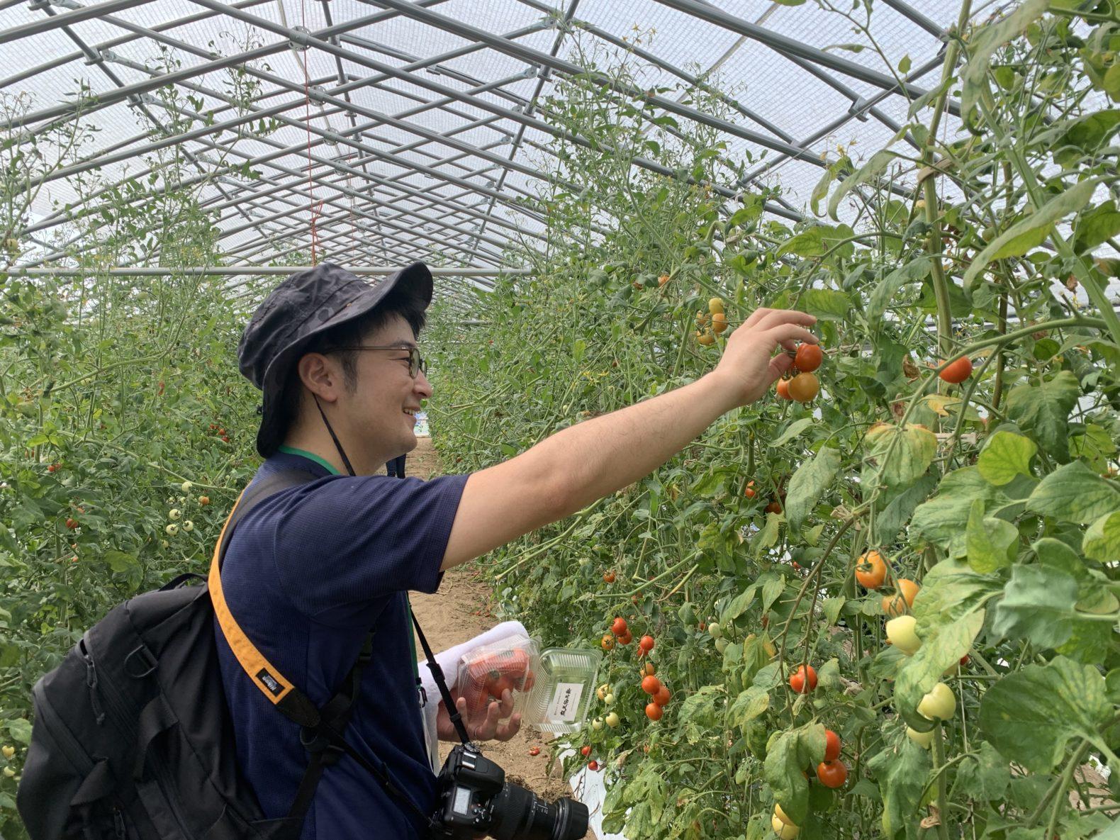 越のルビートマト収穫体験
